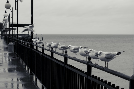 Free stock photo of sea, pier, seagulls, row
