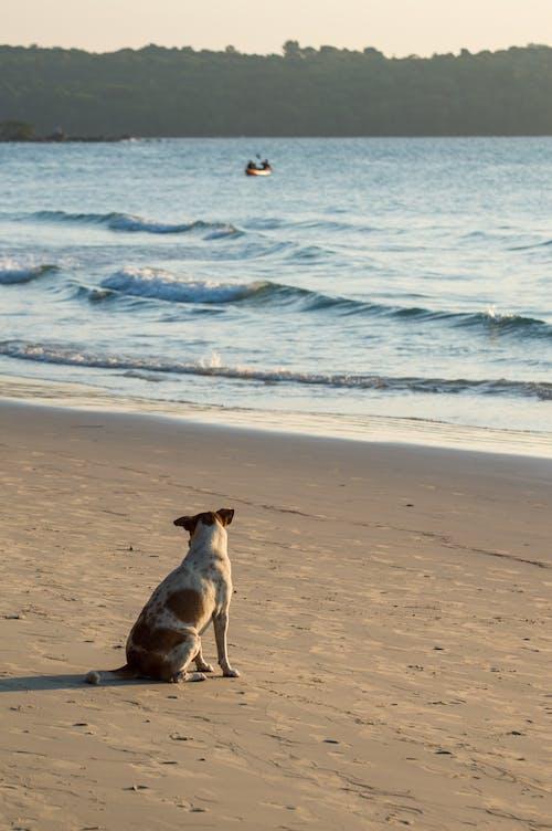Free stock photo of beach, blue sky, coconut, dog