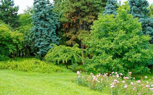 ナイス, パーク, フラワーズ, 曇りの無料の写真素材