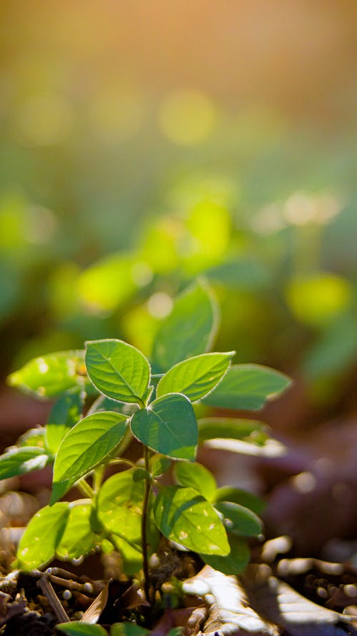 Closeup of delicate green sprouts growing on soil in soft summer sunlight
