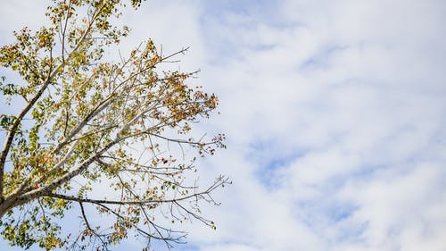 Tree with green leaves on branches under cloudy blue sky