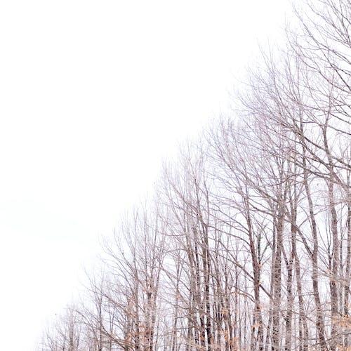 Foto d'estoc gratuïta de arbres, boira, boscos, branca