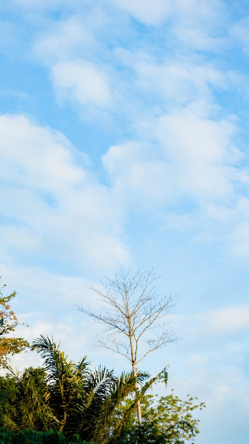 From below of tall trees with green leaves growing in nature against cloudy blue sky in sunny day