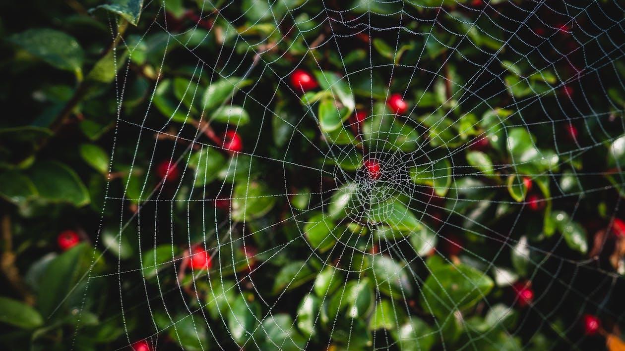 arachnide, brouiller, centrales