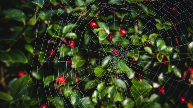 Close-up Photo of Spider Web