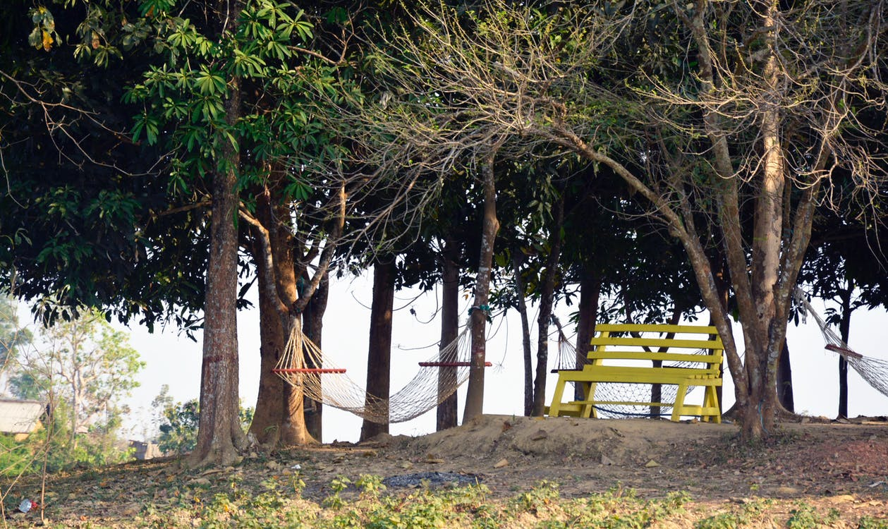 Photo of Bench and Hammocks in the Park