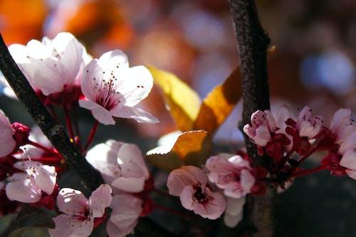 Darmowe zdjęcie z galerii z delikatny, drzewo, flora, gałęzie