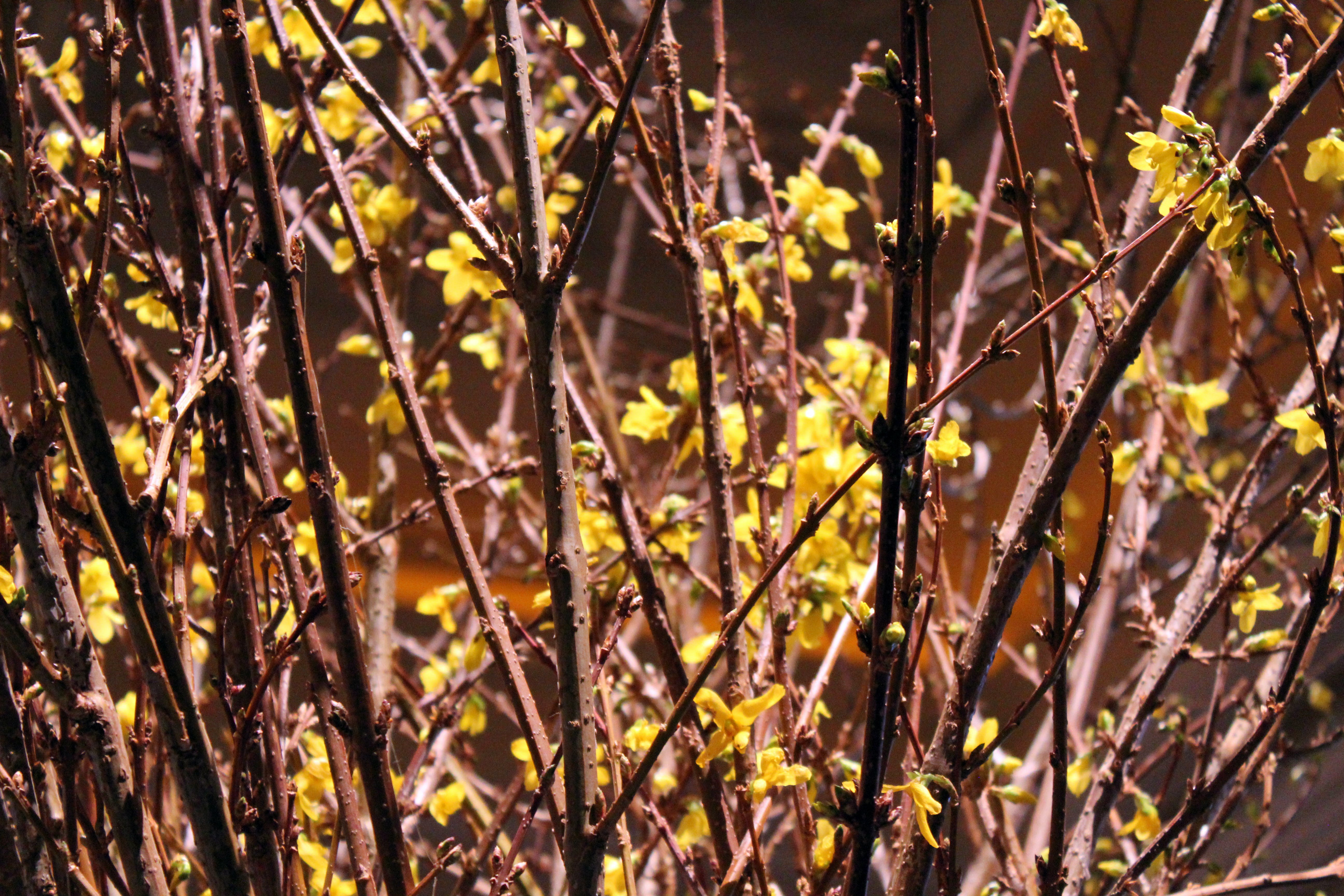 Free stock photo of flowers, branches