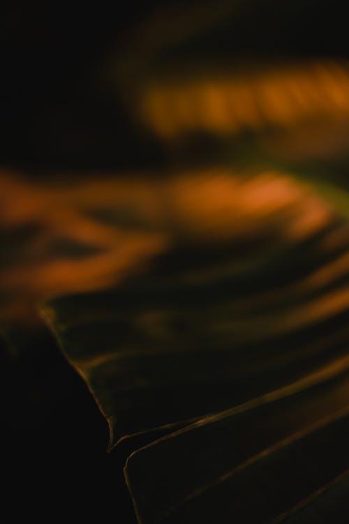 Základová fotografie zdarma na téma banánový list, botanický, detail