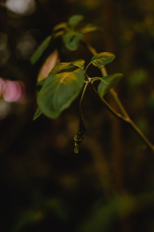 Základová fotografie zdarma na téma botanický, detail, hloubka ostrosti