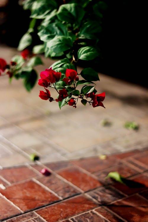 Darmowe zdjęcie z galerii z czerwony kwiat, kwiat, rośliny, selektywna ostrość