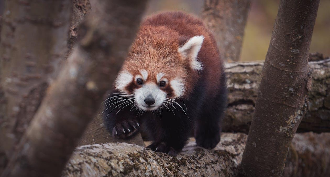 Immagine gratuita di albero, alla ricerca, animale