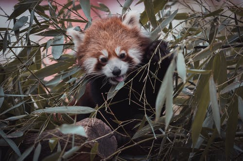 Foto d'estoc gratuïta de a l'aire lliure, animal, arbre