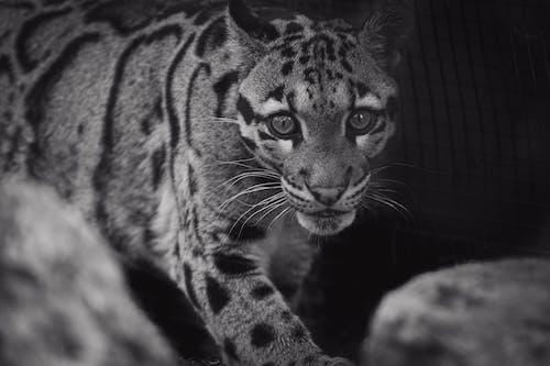 Foto d'estoc gratuïta de animal, carnívor, depredador