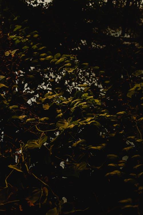 Fotos de stock gratuitas de agua, crecimiento, hojas