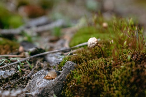 Wild Mushrooms Growing in the Ground ss
