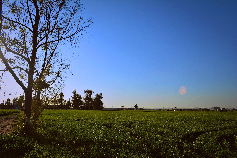 경치, 경치가 좋은, 나무, 농경지의 무료 스톡 사진
