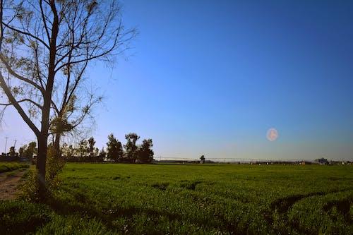 Pastizales Verdes Bajo Un Cielo Azul