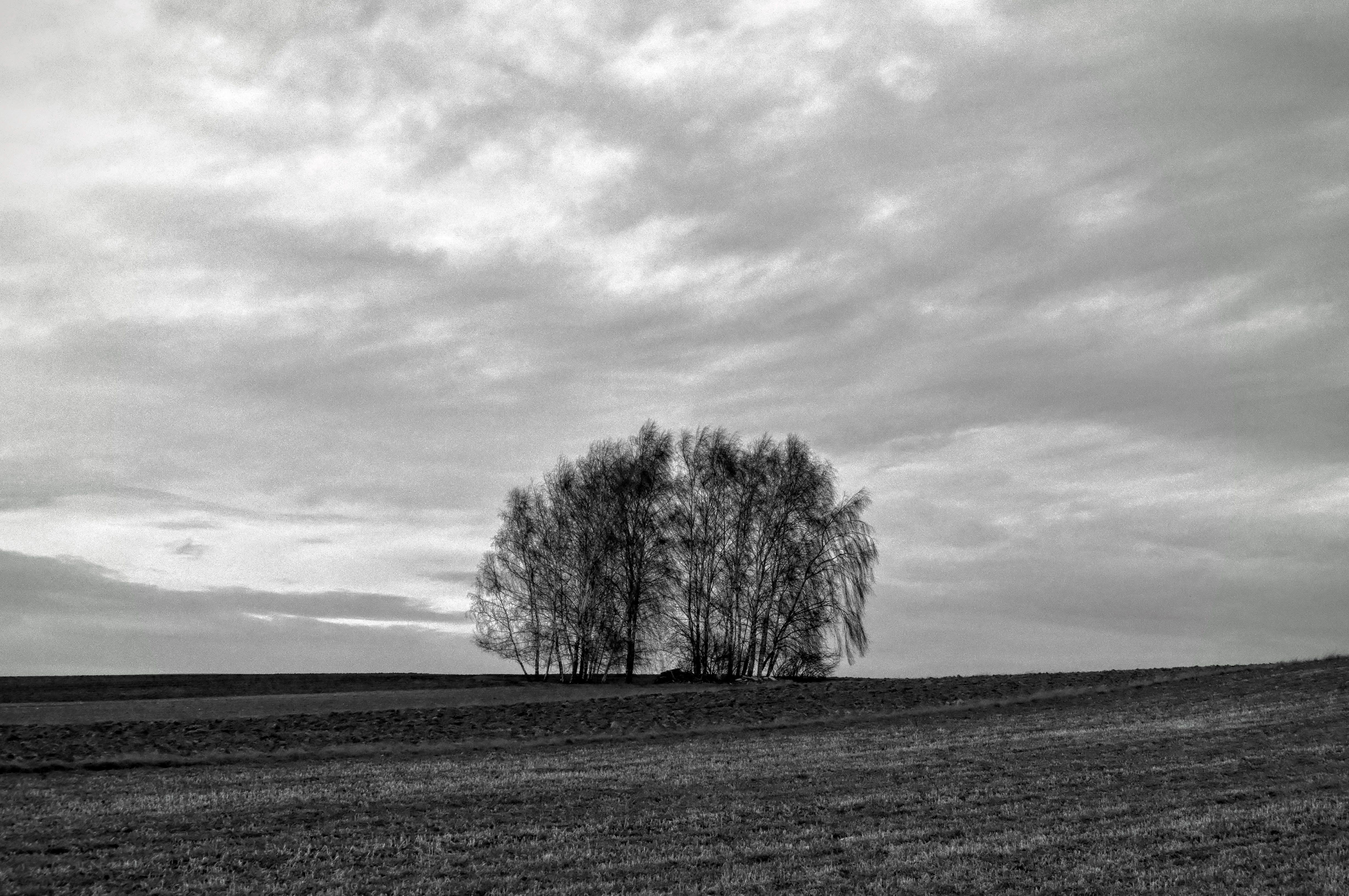 Free stock photo of tree, cloud, bw, poland