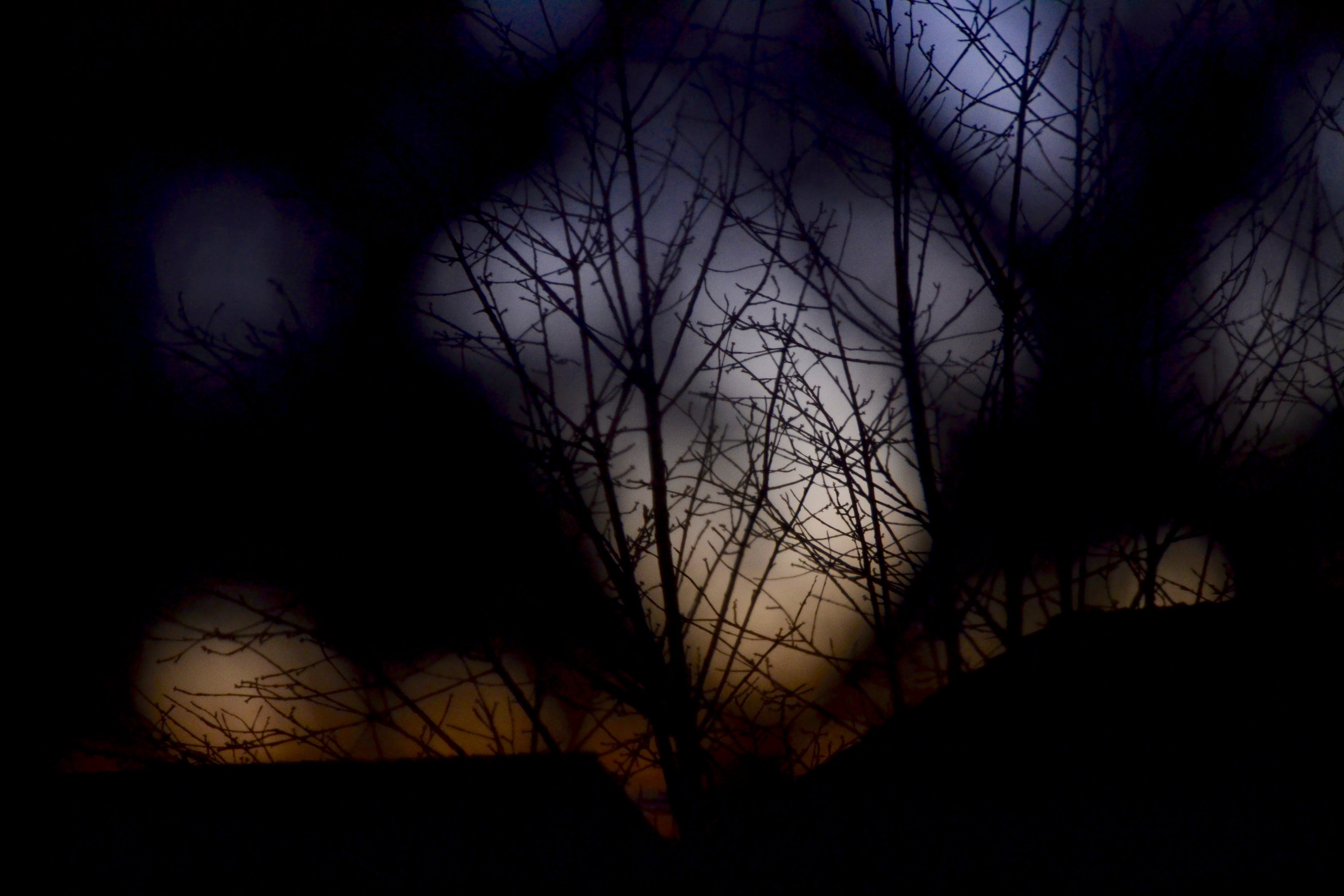 Free stock photo of sky, sunset, branches, tree