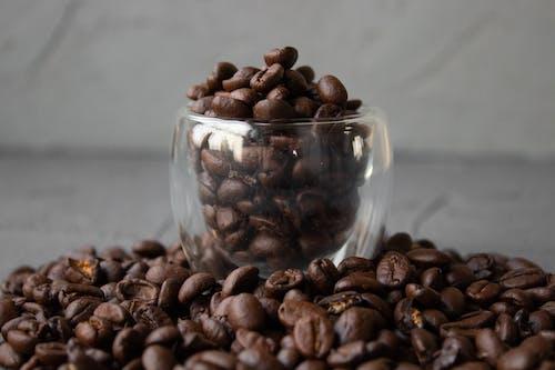 Ingyenes stockfotó arabica, arabica kávé, aratás témában