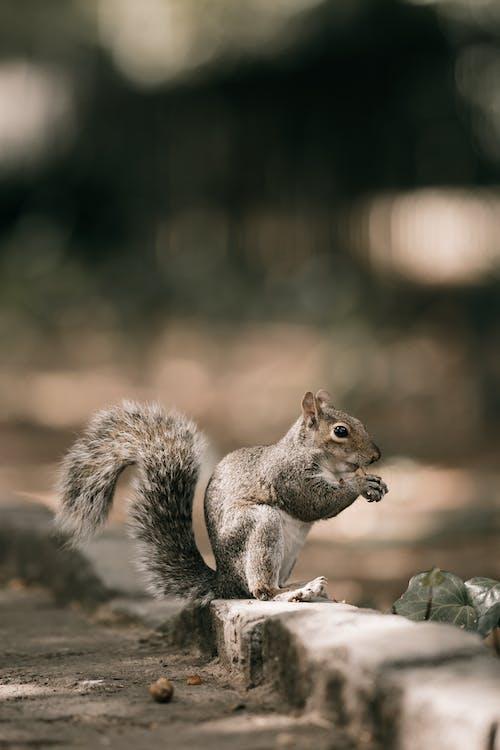 動物, 動物攝影, 可愛 的 免費圖庫相片
