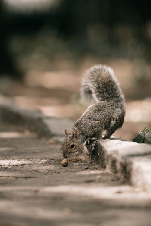 A Brown Squirrel on a Gray Concrete Pavement