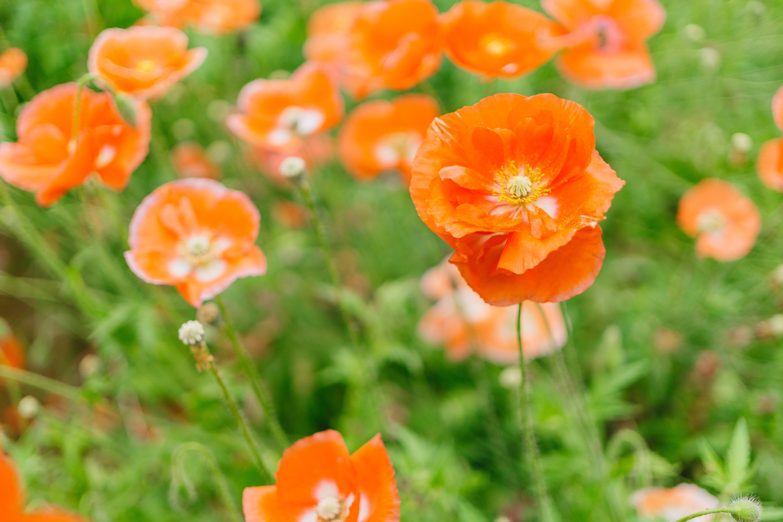 Close-up Photography of Orange Petaled Flowers