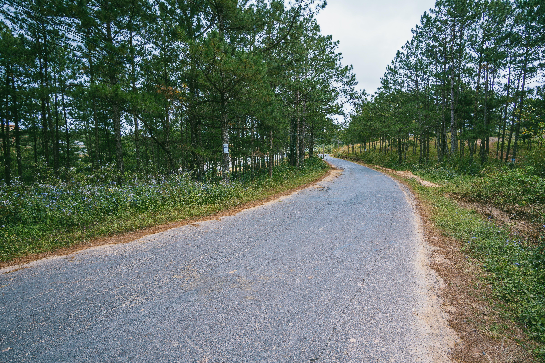 Gratis arkivbilde med asfalt, bue, dagslys, fortau