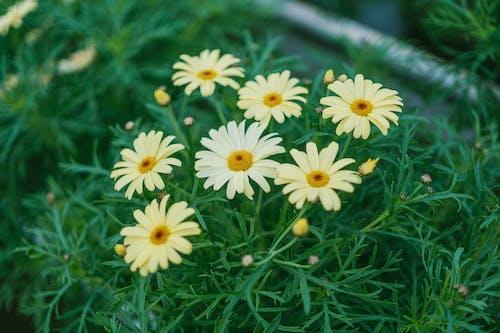 계절, 꽃, 꽃가루, 꽃봉오리의 무료 스톡 사진