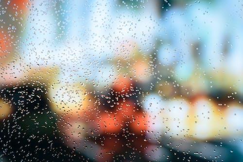 Photos gratuites de automne, chauffeur, clignote