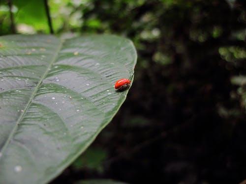 Fotos de stock gratuitas de insecto, reflexionar, rojo, saltar
