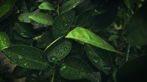 工場, 濡れる, 環境, 緑の無料の写真素材