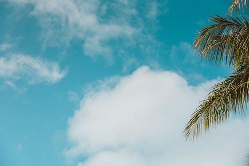 cloudscape, 曇り, 空の無料の写真素材