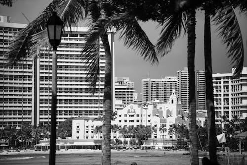 Безкоштовне стокове фото на тему «Будівля, відтінки сірого, кокосові пальми»