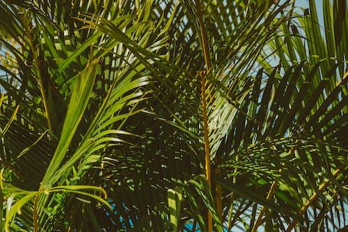 คลังภาพถ่ายฟรี ของ การเจริญเติบโต, ธรรมชาติ, เขตร้อน