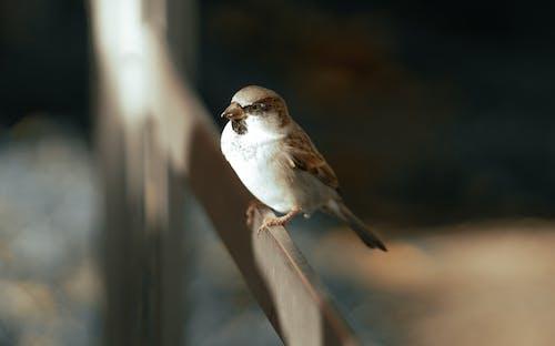 Immagine gratuita di ala, ambiente, angolo alto
