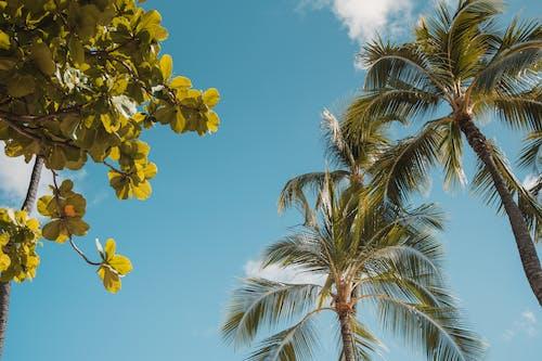 Kostenloses Stock Foto zu baum, blatt, blauer himmel