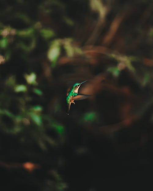 From above of exotic hummingbird with colorful plumage flipping wings in natural environment