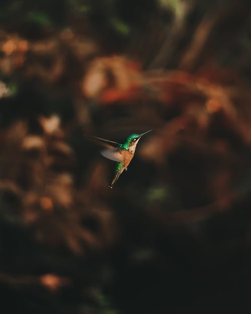 Tiny hummingbird flying against pants in nature