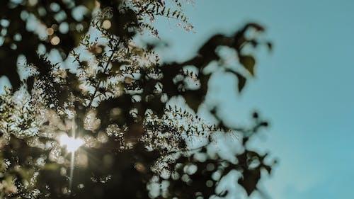 Základová fotografie zdarma na téma barva, denní světlo, design, jasný
