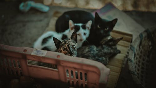 Fotos de stock gratuitas de abandonado, adorable, animal, atigrado
