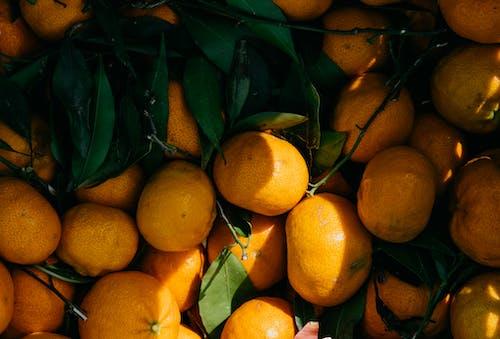 감귤류, 건강한, 비타민 C의 무료 스톡 사진