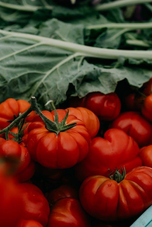 下田, 乾淨的飲食, 以植物為主 的 免費圖庫相片