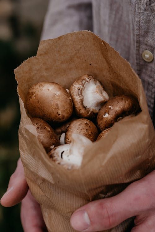 Brown and White Mushroom in Persons Hand