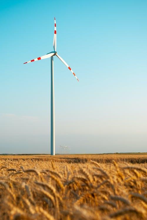 A Windmill in the Wheatfield