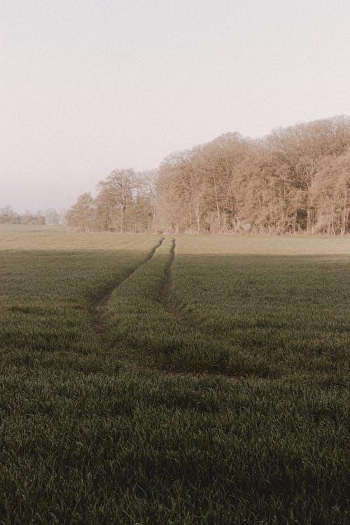 copy space, 가을, 경로의 무료 스톡 사진