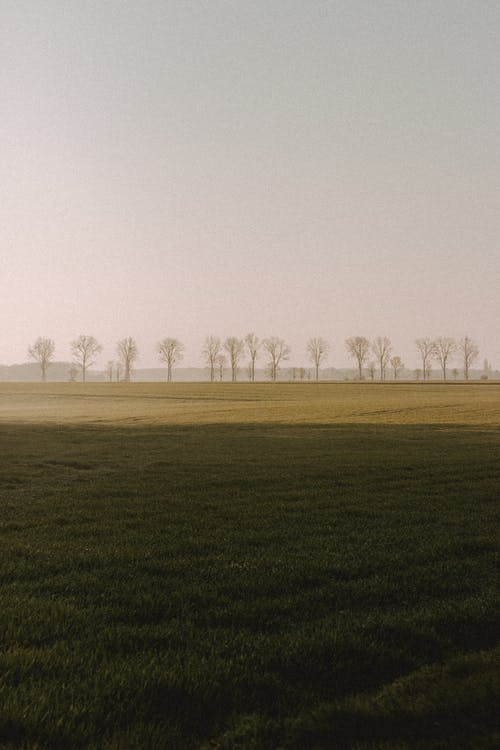 Picturesque view of vast green meadow with shadow and dry trees in row under light sky in fall