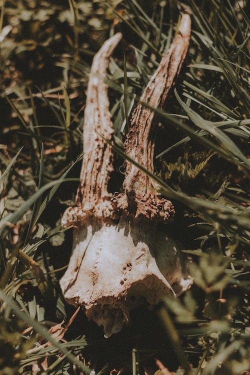 Dead animal skull with horns on grass in sunlight
