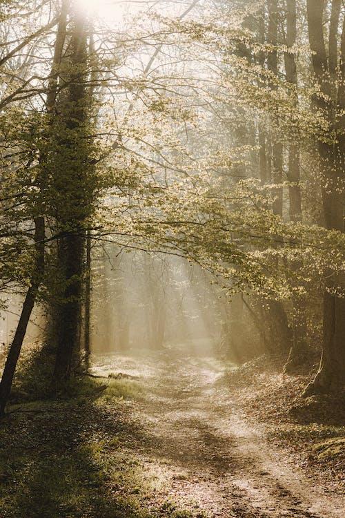 Imagine de stoc gratuită din adresă, arbore, botanică